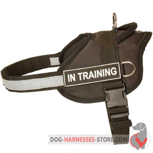Training nylon dog harness for easy identification