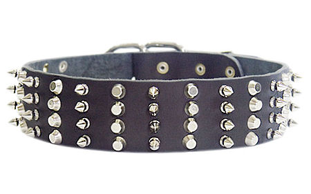 2 inch Leather Dog Collar with STUDS and SPIKES for every day walking