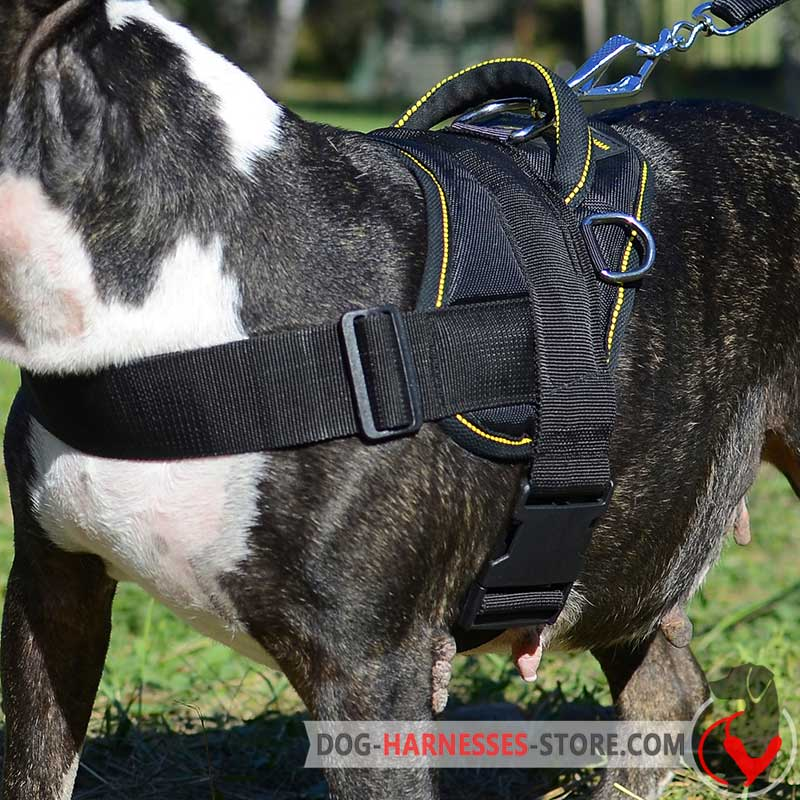 Nylon Bernese Mountain Dog Harness For Tracking Pulling