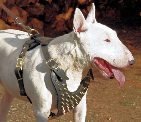 spiked leather dog harness for bull terrier