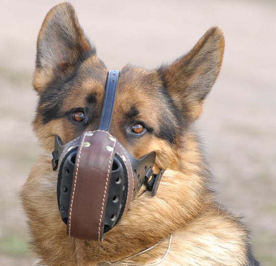 Stop Dog Barking for all breeds with this special design muzzle