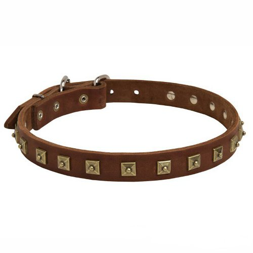 Decorated Leather Dog Collar with Brass Square Studs