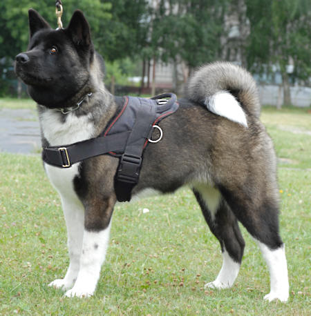 Akita Inu Multi-purpose Nylon Dog Harness for Pulling