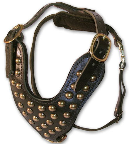 Padded Leather dog harness with studs
