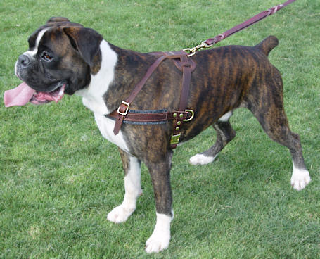pulling dog harness for boxer dog training
