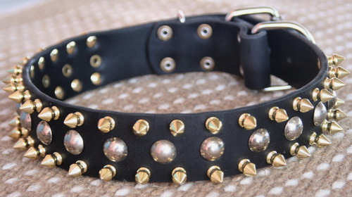 3 Rows brass Leather Spikes & Studded best Dog Collar