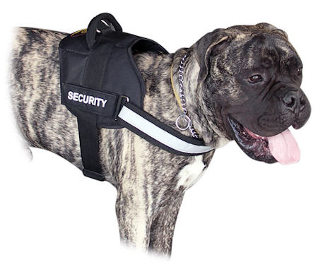 All Weather Harness for Bullmastiff