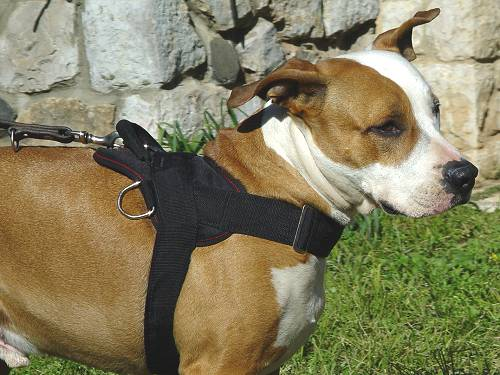Nylon Staffordshire Terrier Harness