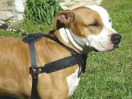 amstaff pulling, tracking dog harness