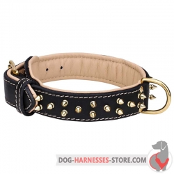 Spiked Leather Dog Collar with Soft Padding and Brass Hardware