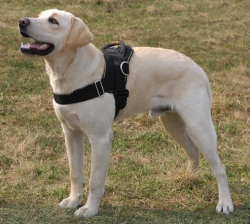 Multifunctional Labrador Retriever Harness for Pulling