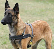 malinois tracking dog harness