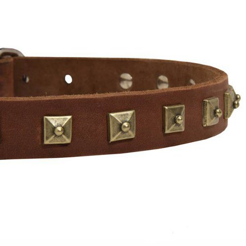 Leather Dog Collar Studded and Riveted