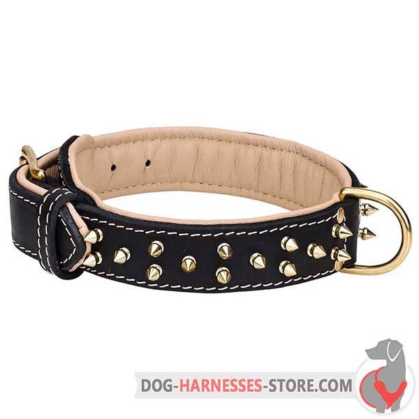Padded Leather Dog Collar with 2 Rows Brass Spikes