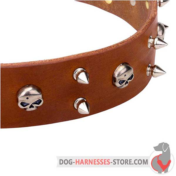 Spiked Leather Dog Collar with Nickel Plated Hardware and Skulls