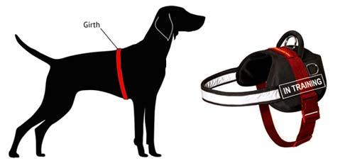 Your Dog For This Harness