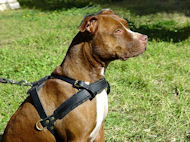 pit bull leather dog harness for tracking,pulling