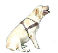 leather dog harness for labrador retriever